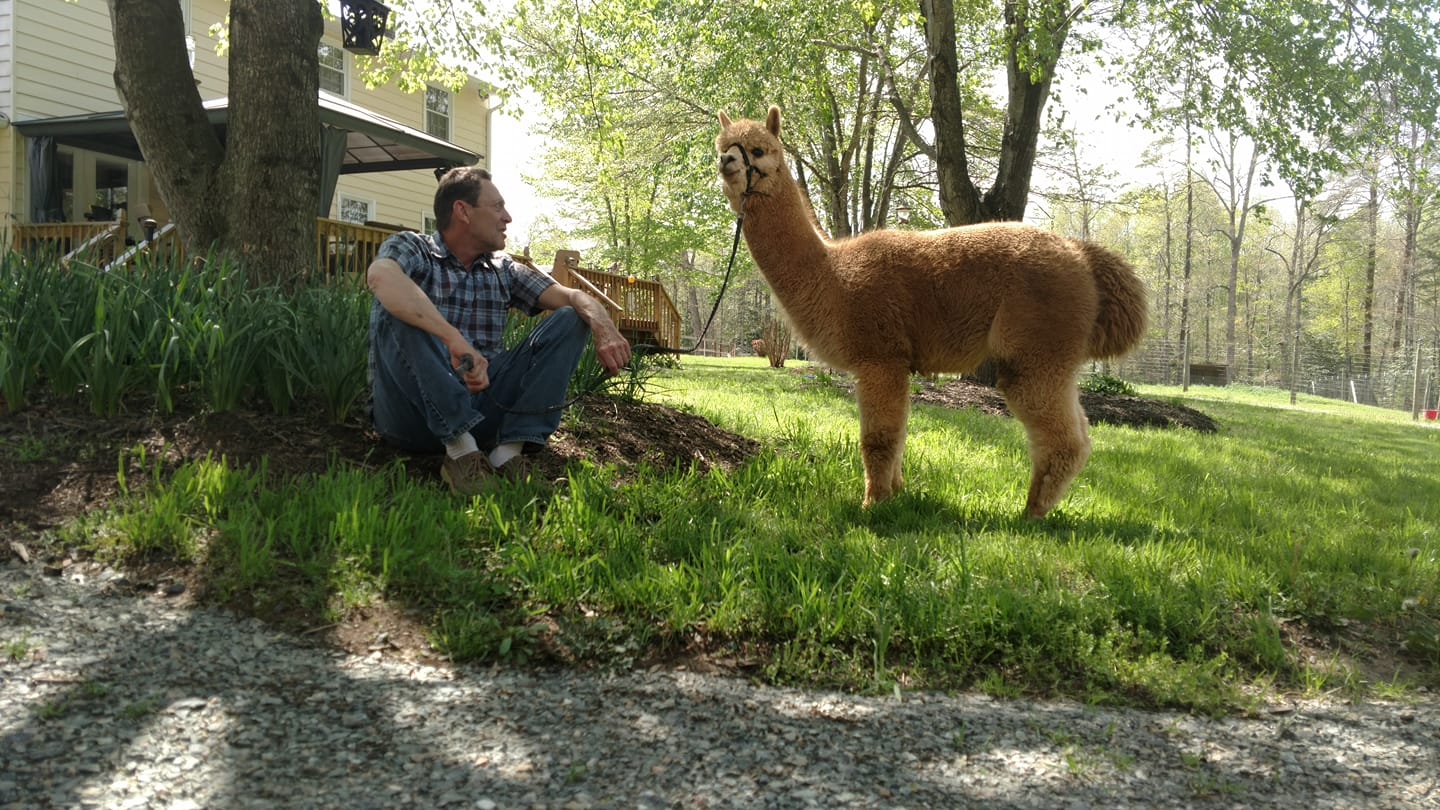 Open Farm Day at Holly Hill Alpacas